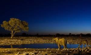 WWF: Οι πληθυσμοί των άγριων ζώων μειώθηκαν κατά 58% τα τελευταία 45 χρόνια