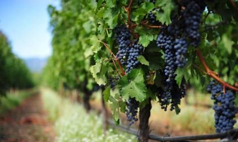Ημέρα Οινοτουρισμού: Μυηθείτε στον μαγικό κόσμο του κρασιού, δωρεάν