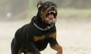 Σοκ στο Ηράκλειο: Κι άλλο παιδί στο νοσοκομείο από επίθεση σκύλου