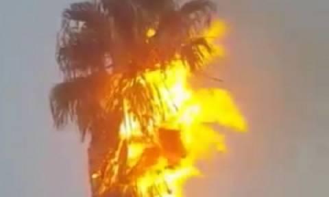 Κεραυνός έπεσε σε δέντρο και προκάλεσε τον πανικό σε κατοικημένη περιοχή στη Λεμεσό (photo)