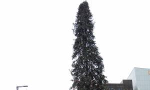Αυτό είναι το ασχημότερο χριστουγεννιάτικο δέντρο που έχετε δει ποτέ! (pics+vid)