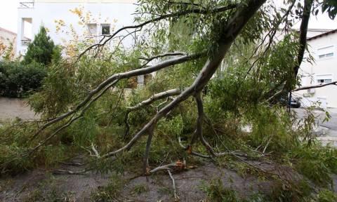 Τραγωδία στην Έδεσσα με 66χρονο - Τον καταπλάκωσε δέντρο