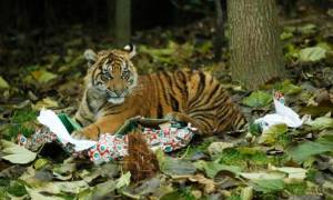 Τα Χριστούγεννα έφθασαν και στο ζωολογικό κήπο του Λονδίνου! (video)