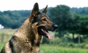Είναι αυτός ο πιο... χαλαρός σκύλος του κόσμου; (vid)