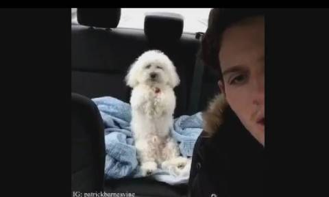 Τρελό γέλιο! Αυτό το σκυλάκι πιστεύει ότι είναι άνθρωπος –Δείτε τι κάνει (video)