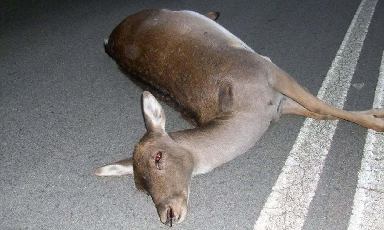 Ρόδος: Επικήρυξαν τον παρανοϊκό που σκοτώνει τα ελάφια