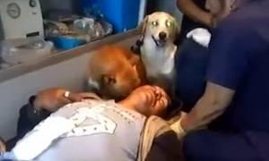 Συγκινητικό βίντεο: Σκύλοι συνοδεύουν το αφεντικό τους στο νοσοκομείο