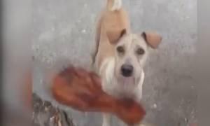 Ο λόγος που η σκυλίτσα περιμένει να της δώσουν φαγητό θα σας συγκινήσει! (video)