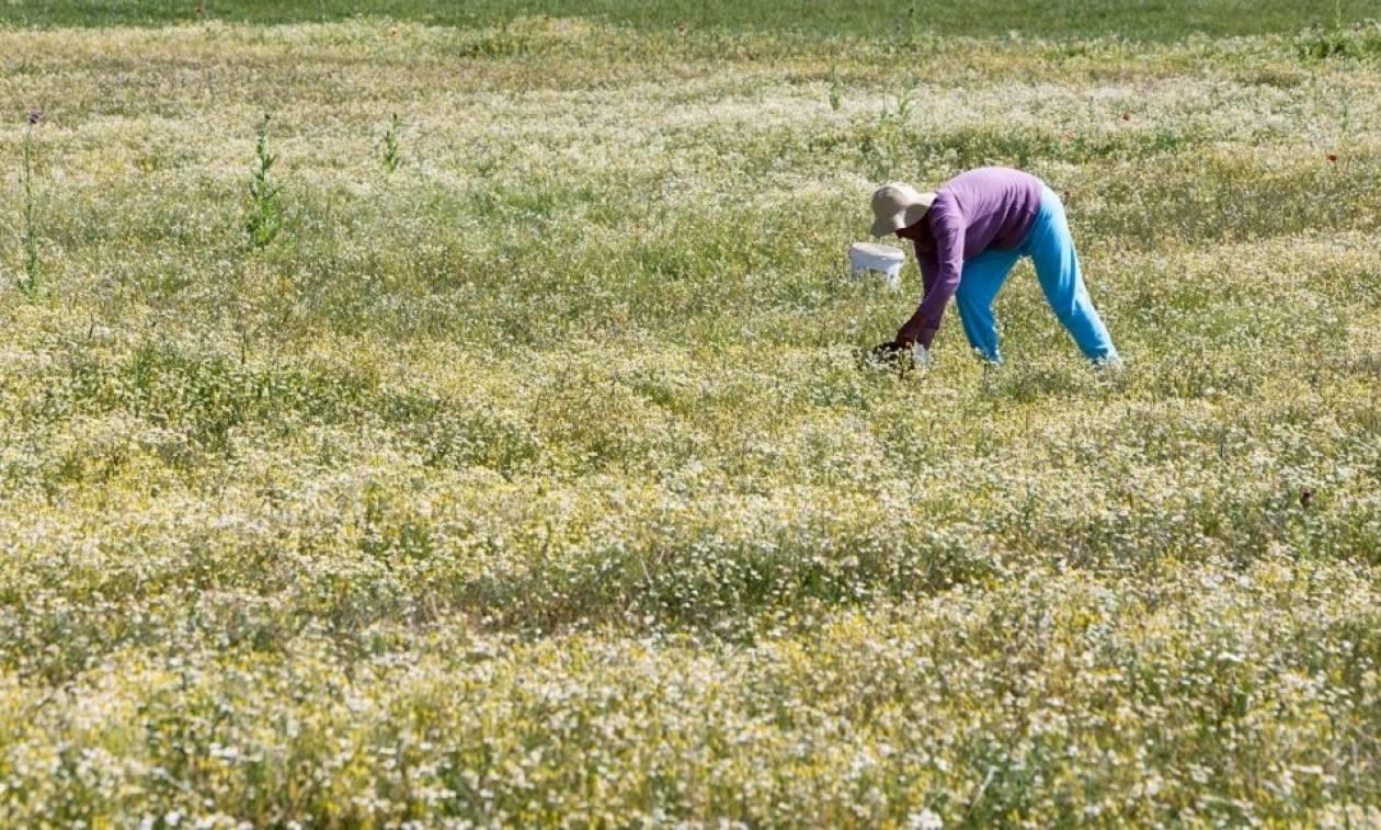Εγκύκλιος: Τι ισχύει για ασφαλισμένους αγρότες που απασχολούνται και ως μισθωτοί