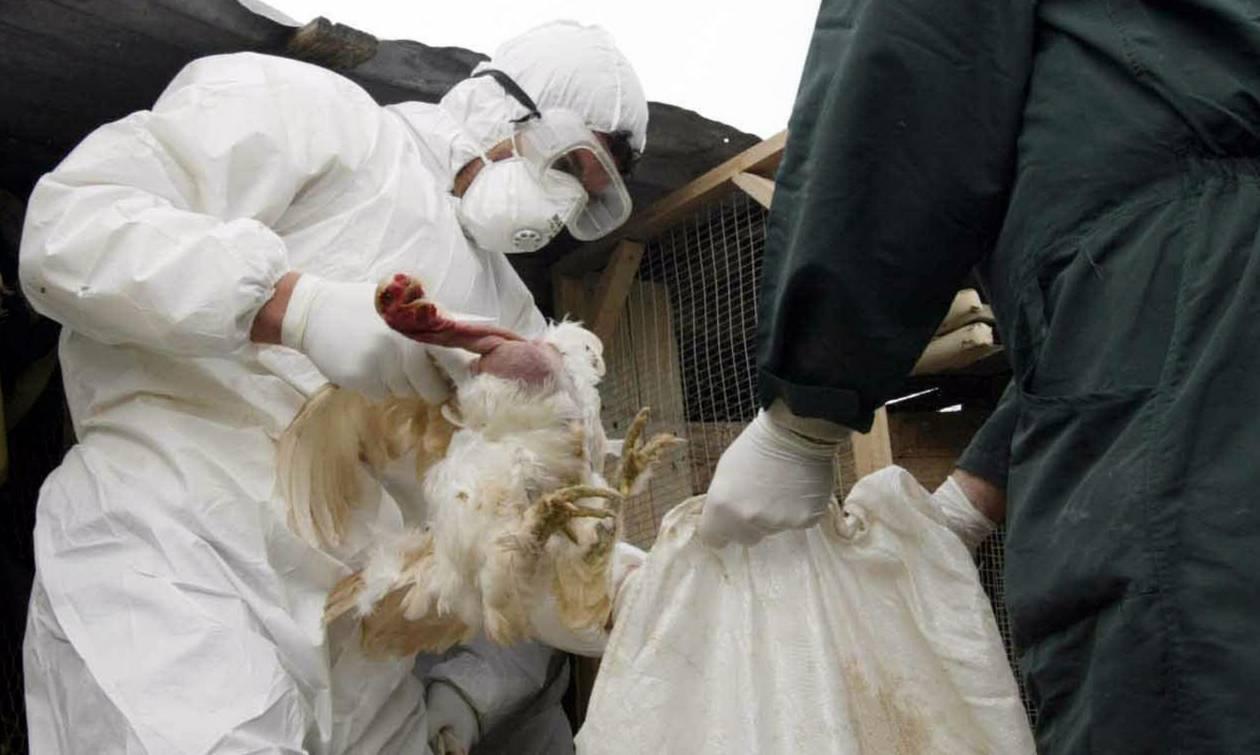 Συναγερμός στην Ευρώπη: Εξαπλώνεται ραγδαία η γρίπη των πτηνών