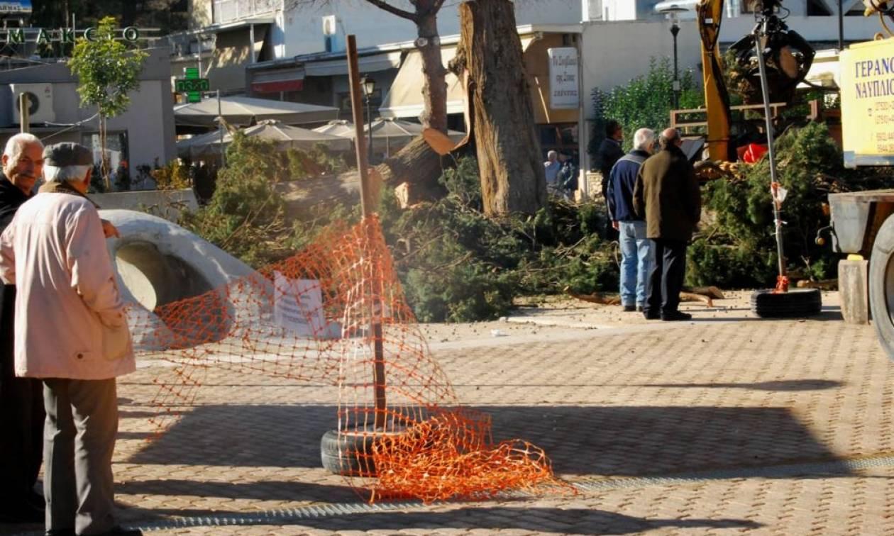 Έκοψαν το ιστορικό κυπαρίσσι στην πλατεία του Άργους