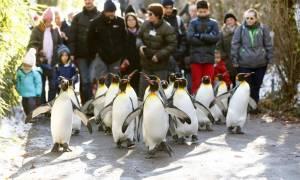 Καιρός: Έτσι δεν θα γλιστράτε στον πάγο – Κάντε το όπως οι… πιγκουίνοι!