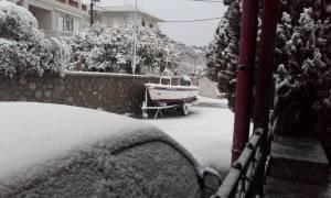 Καιρός ΤΩΡΑ: Μαγευτικές εικόνες στη Χίο - «Μάχη» για να κρατηθούν ανοικτοί οι δρόμοι (photo-video)