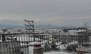 Χιόνια – Έβρος: Μαγικές εικόνες από τις κατάλευκες, ακριτικές Φέρες! (video&photos)