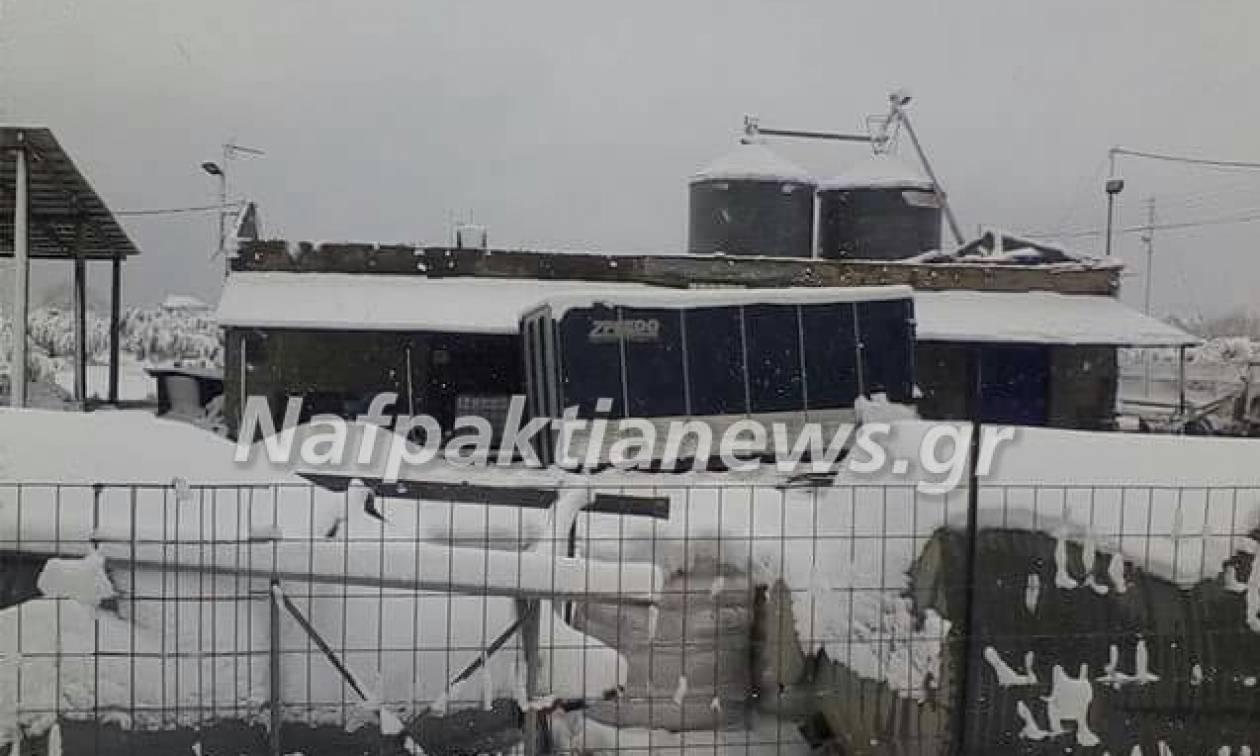 Καιρός LIVE: Κατέρρευσε στέγη από το χιόνι στη Μανάγουλη Φωκίδας (pics)