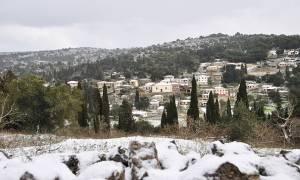 Καιρός: Είδαν χιόνια μετά από 12 χρόνια στη Ζάκυνθο - Ποια σχολεία θα μείνουν κλειστά (vid)