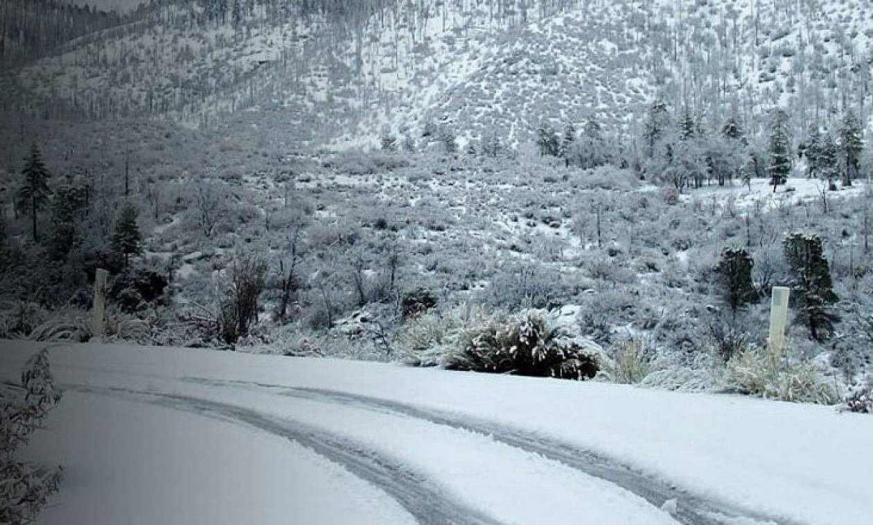 Καιρός - Λάρισα: Απίστευτο - Δεν φαντάζεστε τι έκανε στη μέση του δρόμου την ώρα που χιόνιζε (vid)
