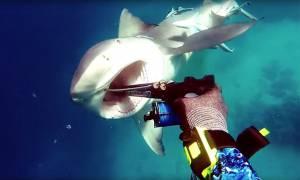 Viral βίντεο: Πάγωσε το αίμα του! Τρομακτική μάχη ψαροτουφεκά με καρχαρία