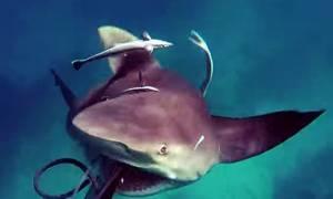 Βίντεο: Η πιο τρομακτική επίθεση καρχαρία σε άνθρωπο που έχετε δει ποτέ
