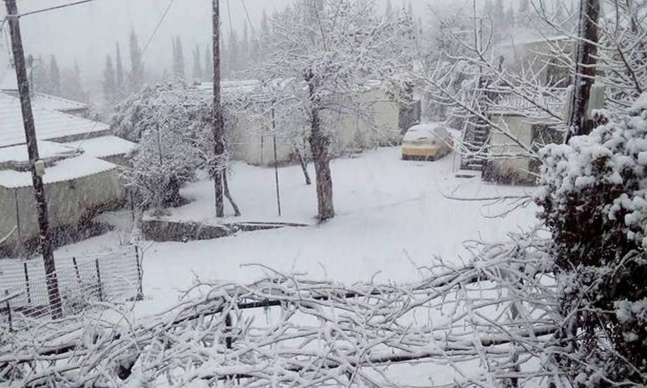 Καιρός Αχαϊα: Σημαντικές ζημιές από τα χιόνια και τον παγο - Αίτημα να κηρυχτεί παγόπληκτος o δήμος
