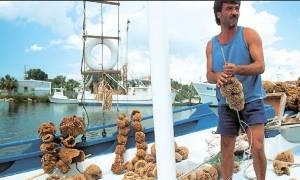Οι Καλύμνιοι του Τάρπον Σπρινγκς θα μεταφέρουν εκεί ακόμα και πέτρες...από το νησί τους!