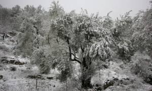 Καιρός ΤΩΡΑ: Στα «λευκά» και ο Έβρος