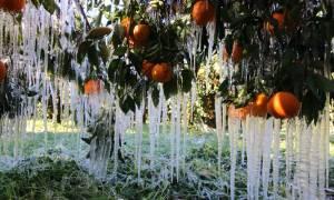 ΕΛΓΑ: Οι οδηγίες και τα δικαιολογητικά για τις αποζημιώσεις από τον παγετό
