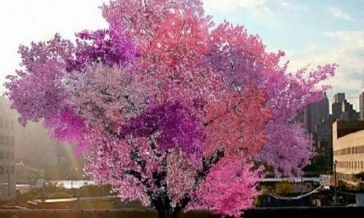 Το πιο... τρελό δέντρο της γης, παράγει 40 διαφορετικά φρούτα (Video)