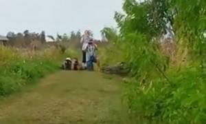 Πανικός σε τουριστικό θέρετρο: Ξεχασμένος «δεινόσαυρος» προκαλεί τρόμο! (video)