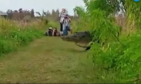 Περπατούσαν στο πάρκο και ξαφνικά πέρασε ένας τεράστιος αλιγάτορας σε μέγεθος... δεινόσαυρου (vid)