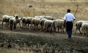 Καιρός- Άμεσα οι αποζημιώσεις των γεωργοκτηνοτρόφων