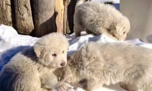 Χιονοστιβάδα Ιταλία: Τρία μικρά σκυλιά βρέθηκαν ζωντανά μέσα στο ξενοδοχείο Rigopiano