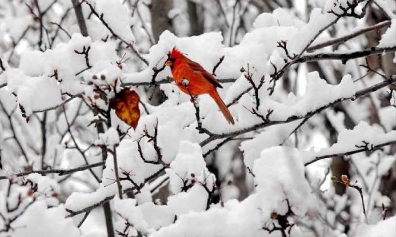 Καιρός: Έκτακτο δελτίο ΕΜΥ - Νέος γύρος κακοκαιρίας με βροχές και χιόνια έως την Τετάρτη