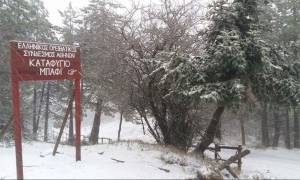 Καιρός-Χιόνια: Στα λευκά και πάλι η Πάρνηθα. Δείτε ζωντανή εικόνα (video)