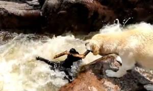 Συγκλονιστικό βίντεο: Σκύλος έσωσε σκύλο από βέβαιο πνιγμό!
