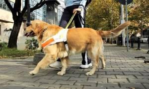 Ανθρώπινη κτηνωδία: Έβαλαν φόλα σε σκύλους τυφλών (vid)