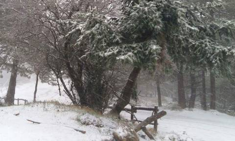 Καιρός: Με... χιόνια μπαίνει και ο Φλεβάρης - Δείτε τους χάρτες των περιοχών που θα χιονίσει (photo)