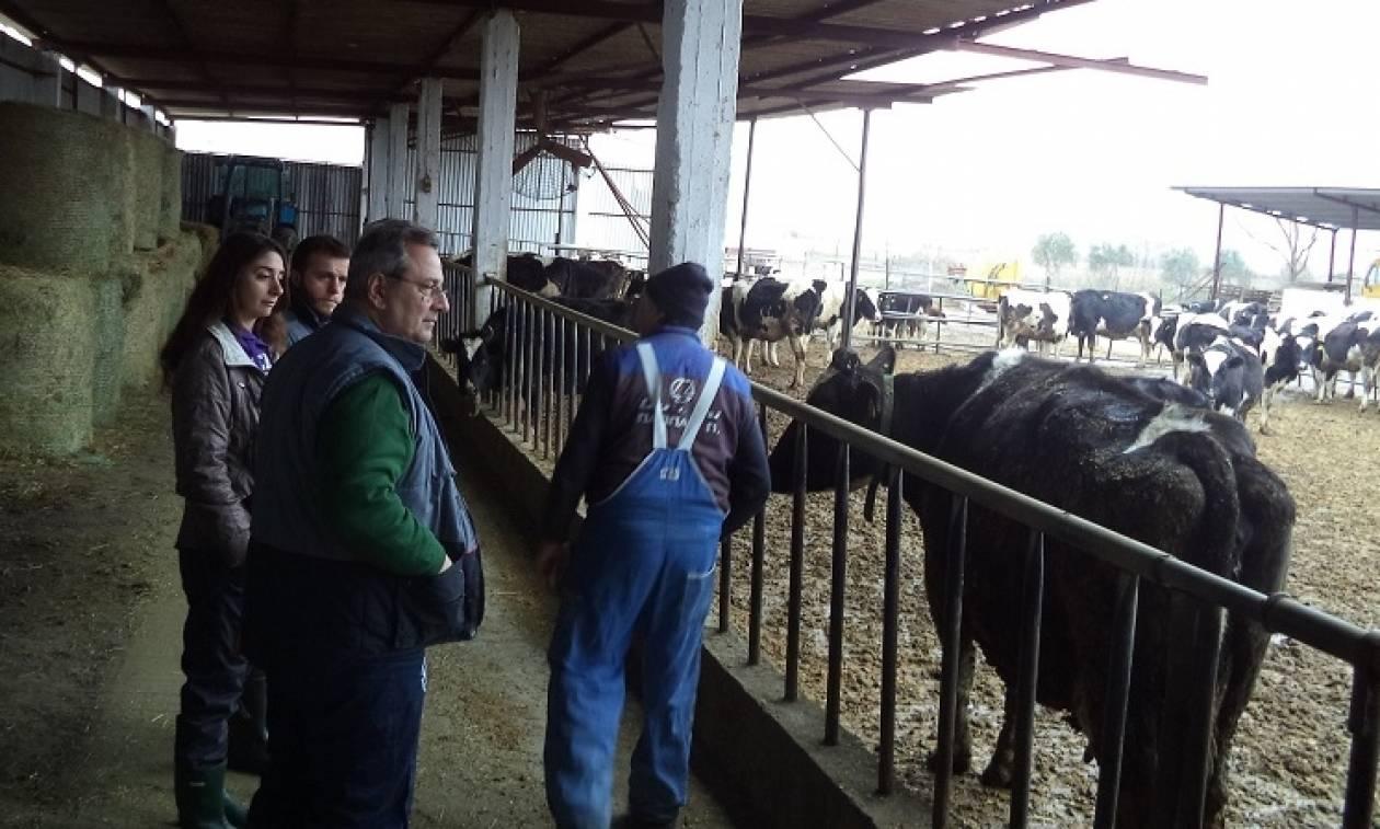 «Παιδεία Γάλακτος»: Εκπαιδευτικό πρόγραμμα γαλακτοπαραγωγών από την Κρι Κρι