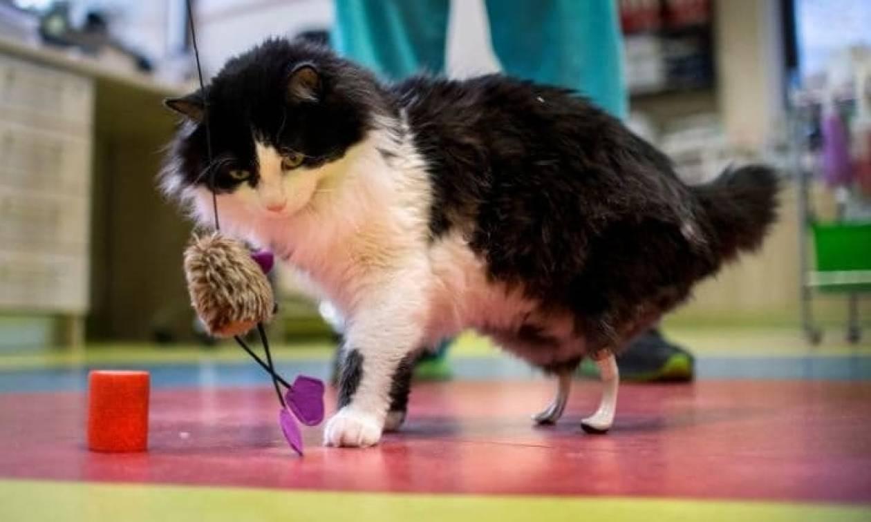 Εντυπωσιακό: «Βιονική» γάτα απέκτησε τεχνητές πατούσες! (pics)