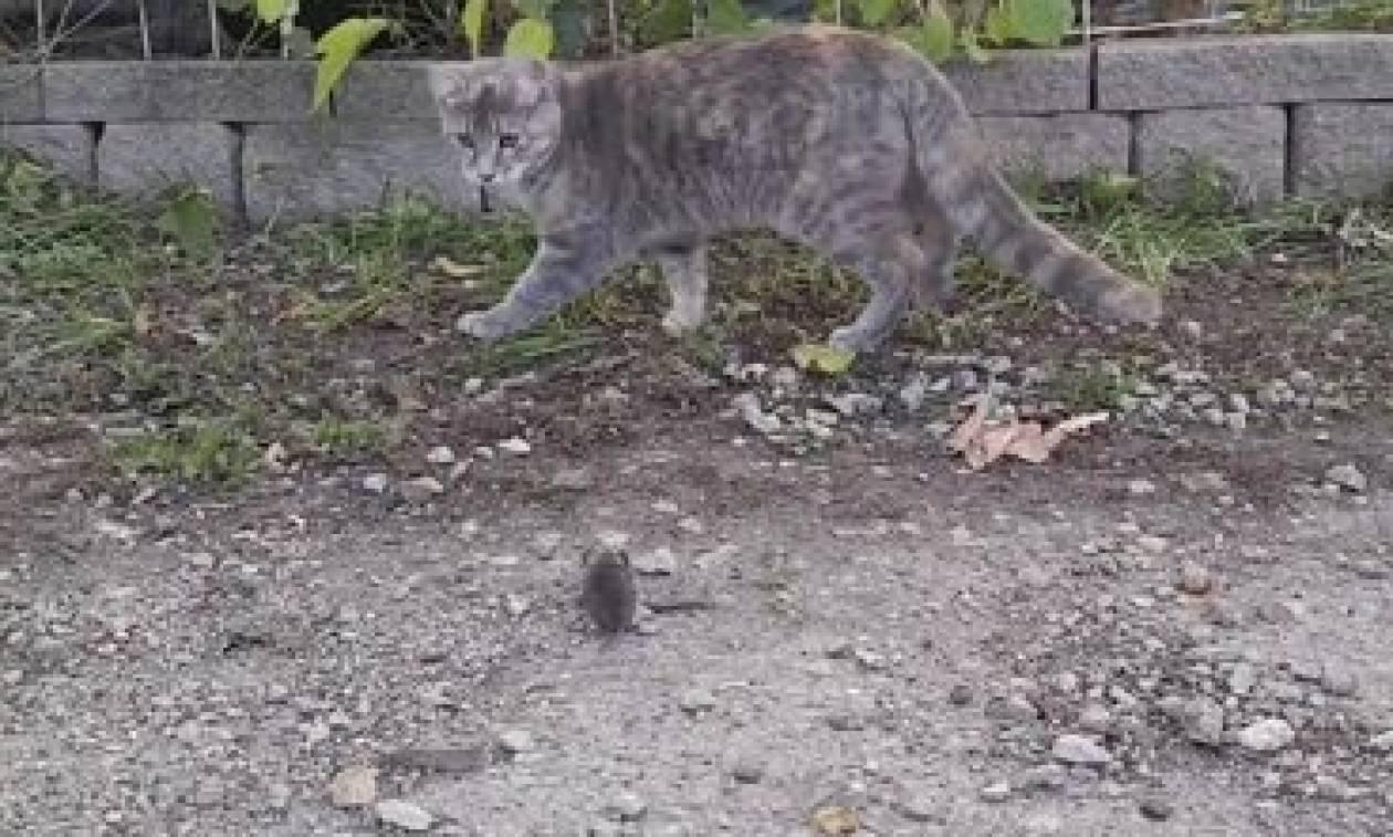 Θα πάθετε σοκ, όταν δείτε ποιο ζώο... κλέβει το ποντίκι απ' τη γάτα και το σκοτώνει (video)