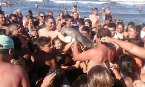 Αργεντινή: Νέος φρικτός θάνατος μικρού δελφινιού από τουρίστες που ήθελαν... selfie (video+photos)