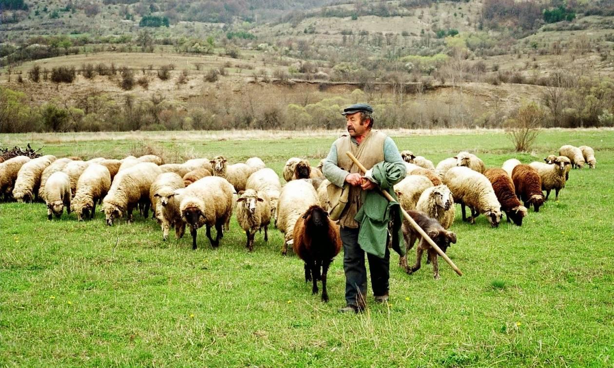 Μετά τους αγρότες στους δρόμους και οι κτηνοτρόφοι