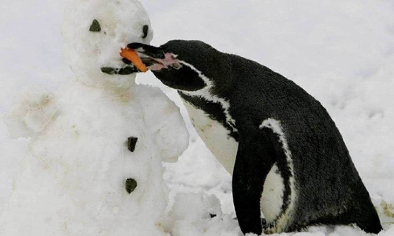 Οι πεινασμένοι πιγκουίνοι, έμπνευση για τα νέα έξυπνα… αυτοκίνητα!