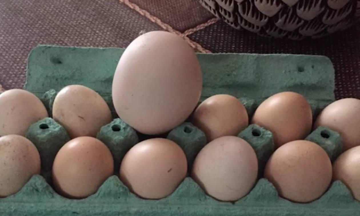 Εσπασε το γιγάντιο αυγό και έπαθε σοκ με αυτό που βγήκε από μέσα... (Video)