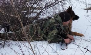 Στρατός Ξηράς: Τα σκυλιά των ενόπλων δυνάμεων εκπαιδεύονται...(pics)