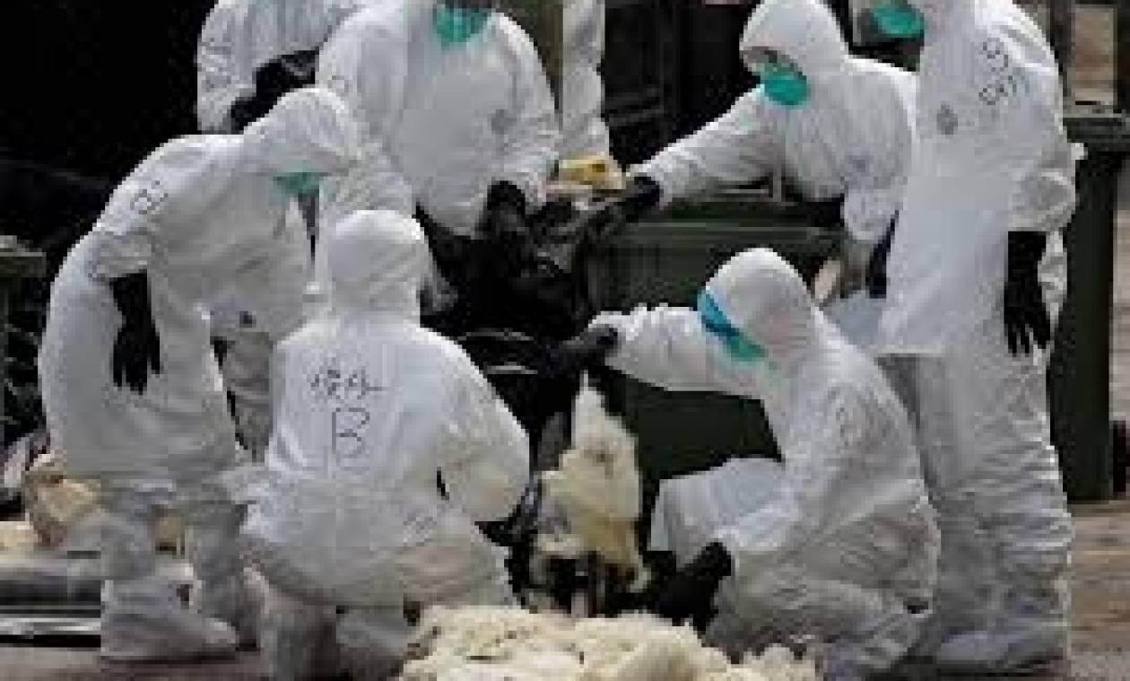 Κρούσμα γρίπης των πτηνών στις Πρέσπες – Συμβουλές και συστάσεις προς τους πολίτες