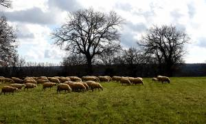 ΥπΑΑΤ: Πρόσκληση για την υποβολή προτάσεων στο Πρόγραμμα Αγροτικής Ανάπτυξης 2014-2020