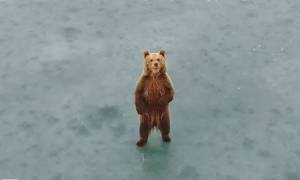 Εντυπωσιακό: Δείτε σε βίντεο από drone το αρκουδάκι στην παγωμένη λίμνη της Καστοριάς