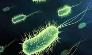 Ανακαλύφθηκαν μικρόβια-μαθουσάλες ηλικίας έως 50.000 ετών