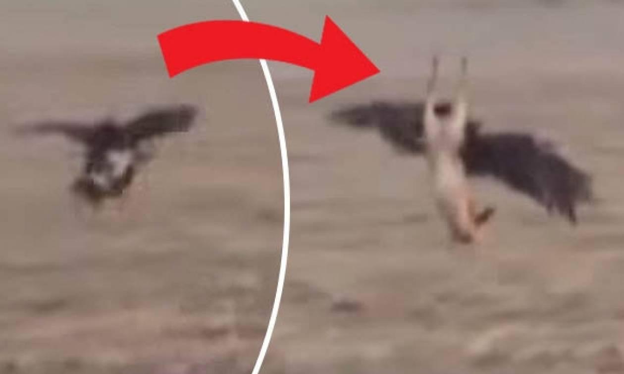 Σοκαριστικό: Γυπαετός... αρπάζει ελάφι μπροστά στην κάμερα (video)
